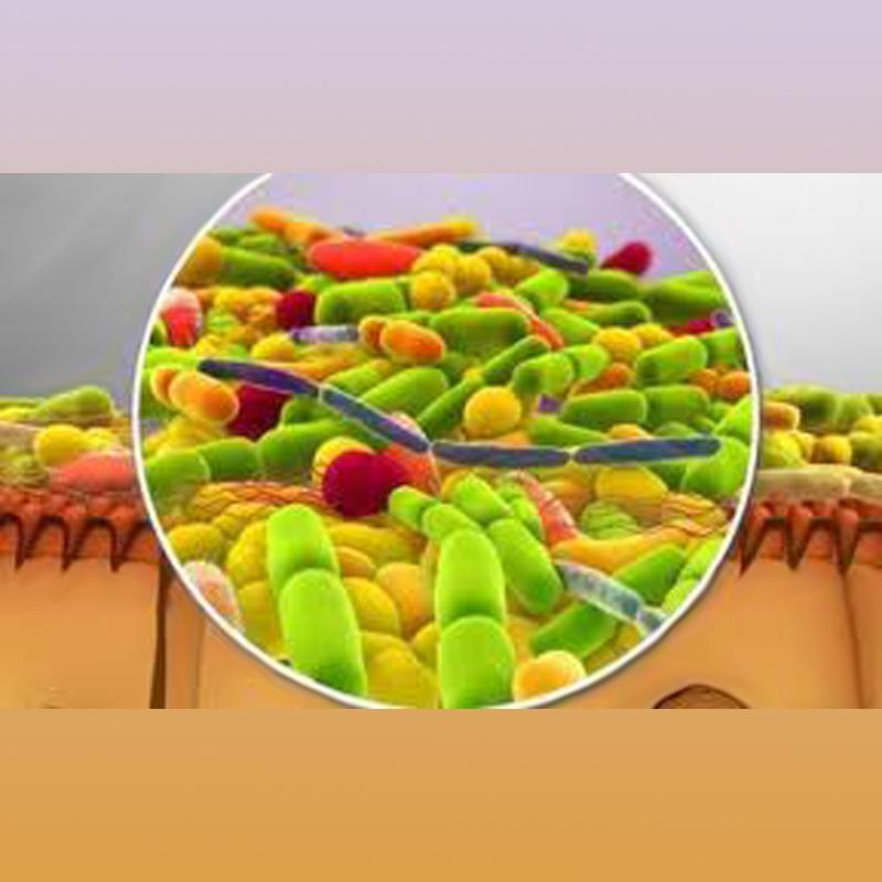 conf_microbiote_sch5w